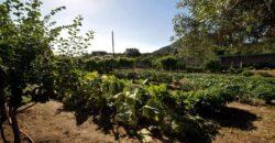 Casa con giardino Olbia